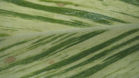 Fond vert de texture de lame Photographie stock