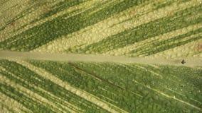 Fond vert de texture de lame Photos stock