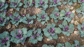 Fond vert de texture de lame Photo libre de droits
