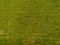 Fond vert de texture de mousse image libre de droits