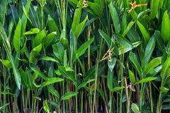 Fond vert des plantes tropicales Photo stock