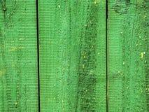 Fond vert du ` s d'arbre Images stock