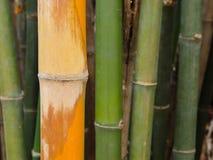 Fond vert en bambou de forêt Photo libre de droits