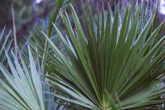 Fond vert-foncé de palmettes Palmiers de noix de coco Photo atmosphérique de style d'instagram de jungle photos stock