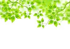Fond vert frais illustration de vecteur
