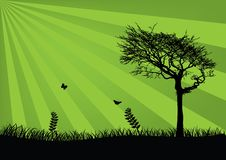 Fond vert frais Photo libre de droits