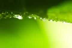 Fond vert frais de nature Images libres de droits