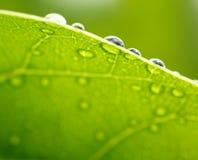 Fond vert frais de nature de feuille Photos libres de droits