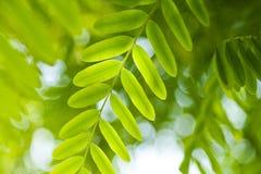 Fond vert frais de nature de feuille Images stock