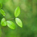 Fond vert frais de nature de feuille Photo stock