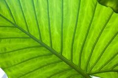Fond vert frais de nature de feuille Photos stock