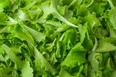 Fond vert frais de salade de laitue Photographie stock