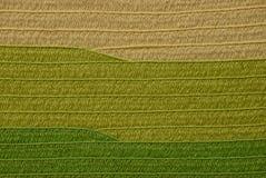 Fond vert gris des morceaux de papier image libre de droits