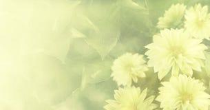Fond vert jaunâtre floral de vintage beau Le jaune fleurit le dahlia Photos libres de droits
