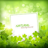 Fond vert naturel Image stock
