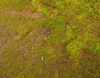 Fond vert naturel de mousse Photographie stock libre de droits