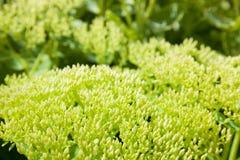 Fond vert normal Photos libres de droits