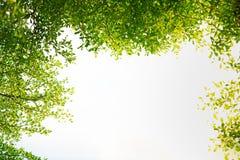 Fond vert normal avec l'orientation s?lectrice photo stock