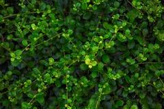 Fond vert par nature image stock