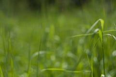 Fond vert parfait par l'herbe fraîche image stock
