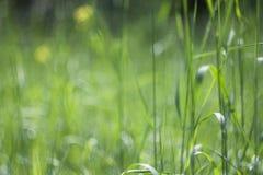 Fond vert parfait par l'herbe fraîche photographie stock