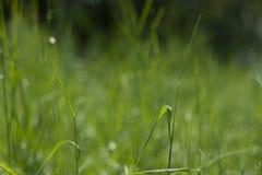 Fond vert parfait par l'herbe fraîche photographie stock libre de droits