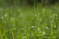 Fond vert parfait par l'herbe fraîche image libre de droits