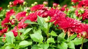 Fond vert rouge très beau des feuilles et des fleurs banque de vidéos