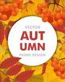 Fond vertical d'automne avec la branche de la sorbe, des baies et de la prairie Photos libres de droits