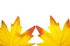 Fond vibrant de lame d'automne photos stock