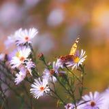 Fond vibrant naturel avec le papillon peint de dame Photographie stock libre de droits