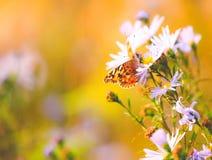 Fond vibrant naturel avec le papillon peint de dame Images stock