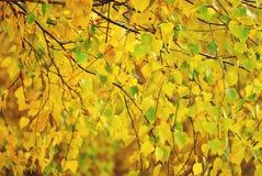 Fond vibrant romantique de scène d'automne, saturé chute jaune de feuille, l'espace de copie images stock