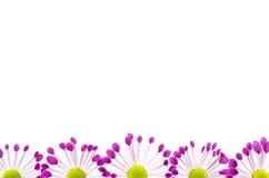 Fond vide de carte postale avec la fleur rose Images libres de droits