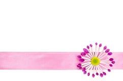 Fond vide de carte postale avec la fleur rose et le ruban rose Images stock