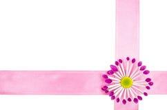 Fond vide de carte postale avec la fleur rose et le ruban rose Photo stock