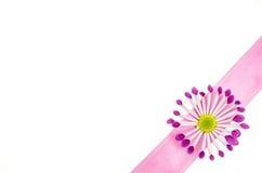 Fond vide de carte postale avec la fleur rose et le ruban rose Image libre de droits