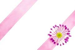 Fond vide de carte postale avec la fleur rose et le ruban rose Photographie stock