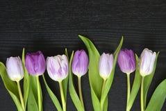 Fond vide en bois de l'espace de copie de wenge noir avec les tulipes colorées Images libres de droits
