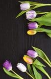 Fond vide en bois gris de l'espace de copie avec les tulipes colorées Photos stock