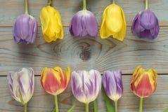 Fond vide en bois gris de l'espace de copie avec les tulipes colorées Photographie stock libre de droits