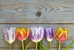 Fond vide en bois gris de l'espace de copie avec les tulipes colorées Photo stock