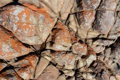 Fondale marino esposto roccioso immagine stock