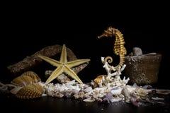 Fondale marino fotografato Fotografia Stock