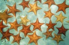 Fondale marino sabbioso con le stelle marine nel mar dei Caraibi Immagini Stock Libere da Diritti