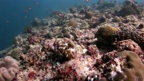 Fondale marino stupefacente subacqueo della barriera corallina in Maldive video d archivio