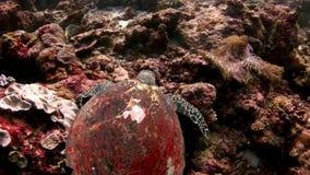 Fondale marino stupefacente subacqueo della barriera corallina in Maldive archivi video