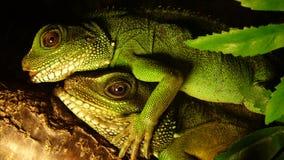 Free Fondling Animals Stock Image - 22790071