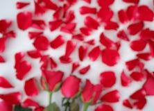 fondo ฺBlurry di rosa e dei petali immagini stock