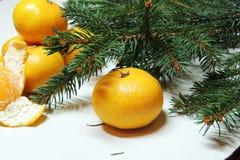 Fondo, árbol y mandarinas de la Navidad Imagen de archivo